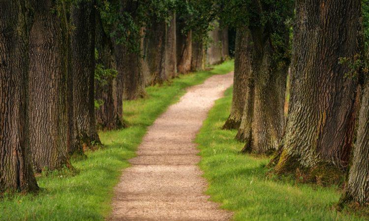 ECFMG Pathways